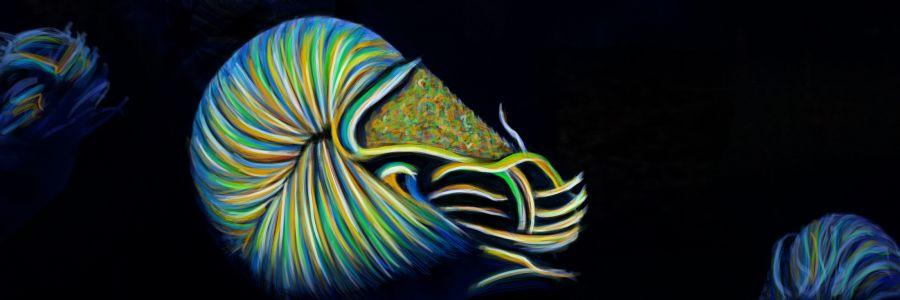 Spectacular Nautilus